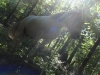 Reykur auf dem Podest (Baumstumpf)